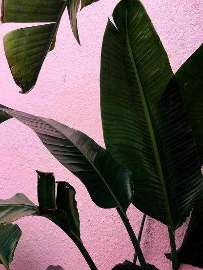 Site Backbgrond Pink